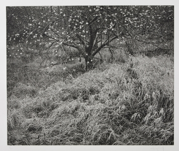 Untitled (1978), Gregory Conniff. 2007