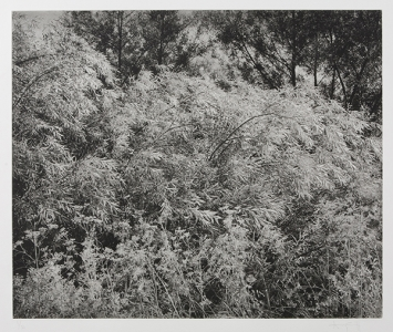 Untitled (2007), Gregory Conniff. 2007