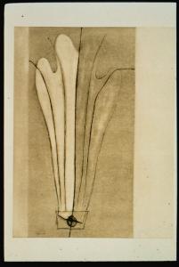 Dissection: Honeysuckle, Suzanne Caporael. 1993