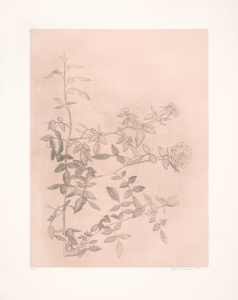 Untitled (pink), Robert Coleman. 1997